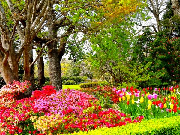 Nằm mơ thấy mùa xuân có ý nghĩa gì với cuộc sống