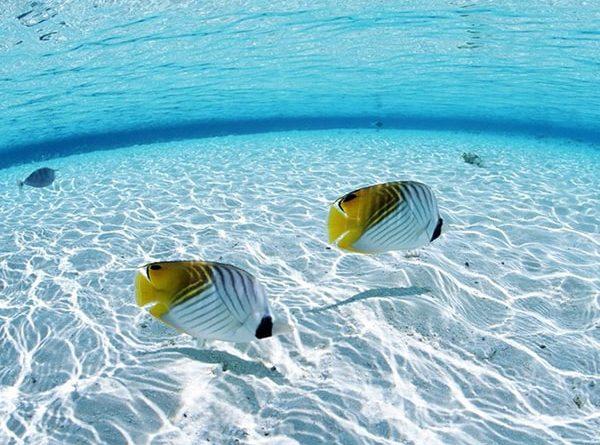 Mơ thấy cá là điềm báo dữ hay lành - Đánh con số nào?