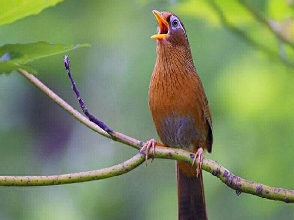 Mơ thấy chim là điềm dữ hay điềm lành - Đánh con số nào?