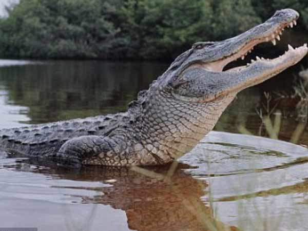 Mơ thấy cá sấu nên đánh số đề con bao nhiêu