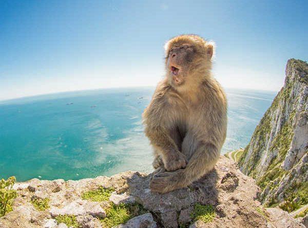 Mơ thấy khỉ là điềm báo gì?