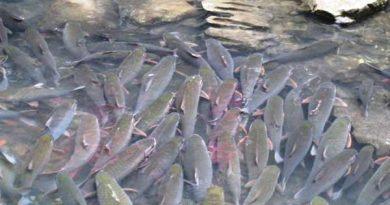 Mơ thấy nhiều cá là điềm báo gì? Lô đề con bao nhiêu?