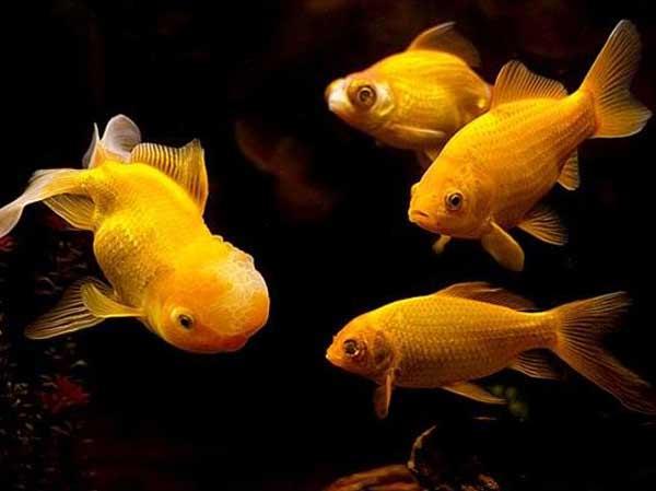 Mơ thấy nhiều cá là điềm báo gì?