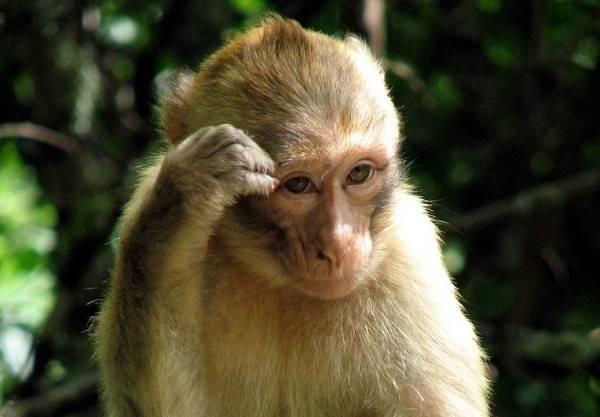 Nằm mơ thấy khỉ đánh số mấy, đánh con gì